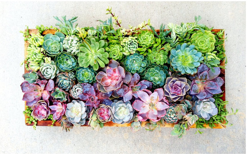 Your Sneak Peek At This Spring S Most Succulent Trend
