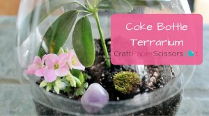 Coke Bottle Terrarium