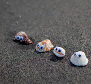Seashell Beach Buddies